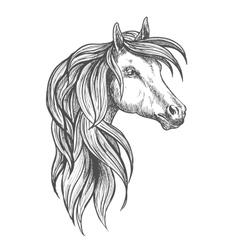 Cavalry morgan horse sketch symbol vector