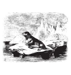 Sea bear vintage vector