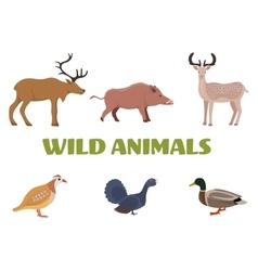 Wild forest animals with boar deer moose duck vector image vector image