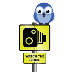 Bird speed camera vector