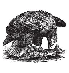 Sea eagle vintage vector