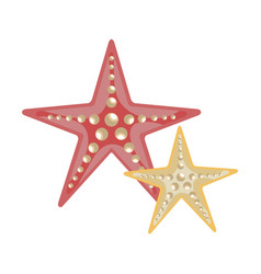 Tropical starfish isolated icon vector