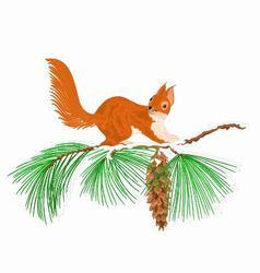 Squirrel on a snow branch Christmas motive vector image