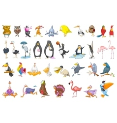 set of various birds vector image