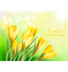 Yellow crocus vector