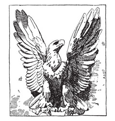 French eagle is a modern design vintage engraving vector