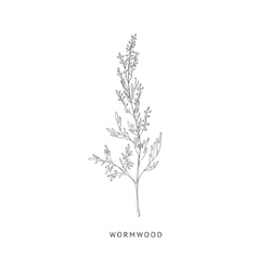 Wormwood Hand Drawn Realistic Sketch vector image