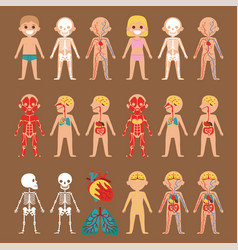 anatomy poster with human body systems vector image
