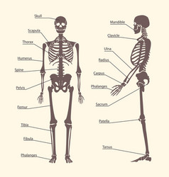 silhouette black human skeleton and part set card vector image vector image