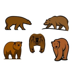 Brown wild bear characters vector