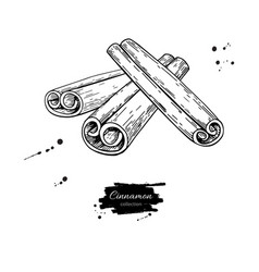 Cinnamon stick drawing hand drawn sketch vector