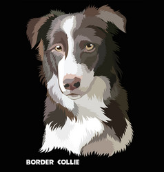 colored border collie vector image vector image