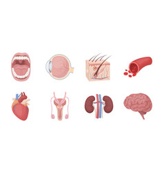 internal organs of a human icons in set collection vector image