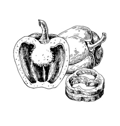 Pepper hand drawn  vegetable vector