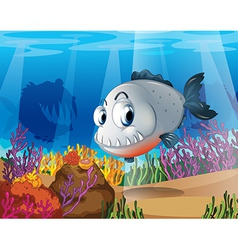A piranha near the coral reefs vector image