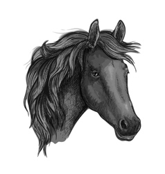 Black horse head of arabian breed vector