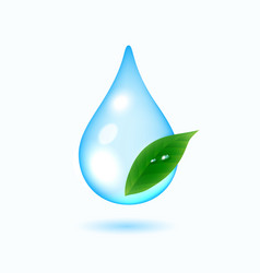 Drop of water with green leaf vector