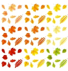 Set of colorful autumn leaves eps 10 vector