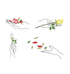 hand holding rose flowers with green leaves vector image vector image