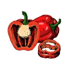 Red bell pepper hand drawn vector