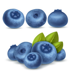 blueberry set vector image vector image