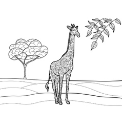 Giraffe coloring book for adults vector image