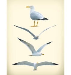 Seagulls icons vector