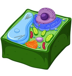 Plant cell in three dimensions vector