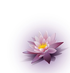 water lily on the white background vector image vector image