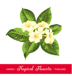 Wedding garland with tropical flowers vector