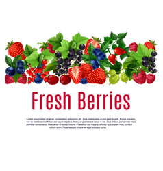 fresh berries and fruits poster or banner vector image