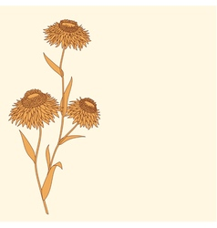 Linear flower drawing detailed vector