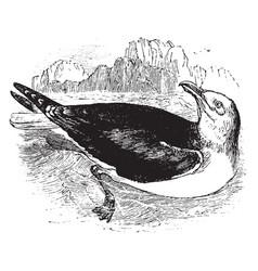 Sea gull vintage vector