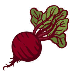 beet isolated object white background vector image vector image