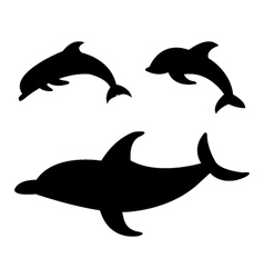 dolphins on white background vector image vector image