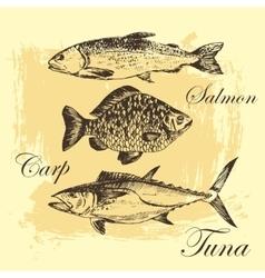 fish sketch drawing - salmon trout carp vector image