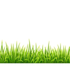 Green isolated grass on white background vector