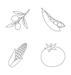 Olives on a branch sweet peas corn cob red vector