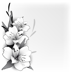 Background lily in graphics vector image