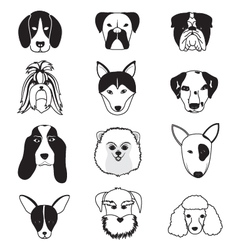 Dogs breed collection vector