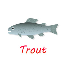fresh trout fish in flat style vector image