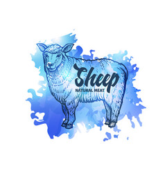 Hand drawn sketch sheep natural meat background vector