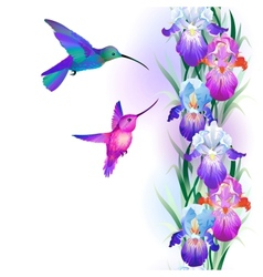 Seamless pattern with Iris and hummingbirds vector image