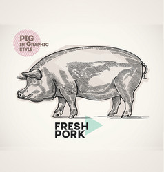 Pig in graphical style vector