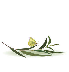 butterfly and eucalyptus vector image