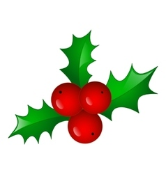 Christmas symbol holly berry vector