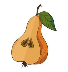 cartoon image of half pear vector image vector image