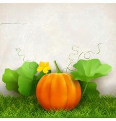 Pumpkin Leaves Grass vector image