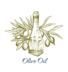 Oil bottle with olive fruits sketch poster vector