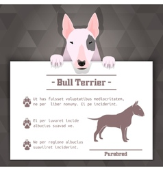 bull terrier dog banner vector image